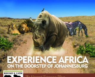 New decade, new adventures at Rhino & Lion Nature Reserve